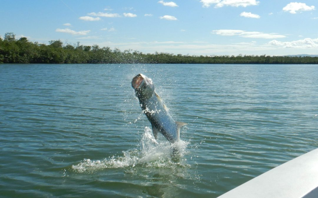 FIGHTING TARPON